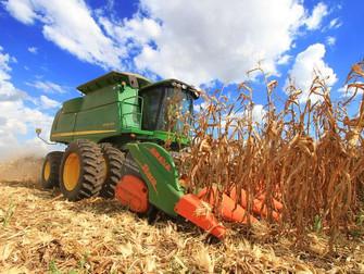 Colheita do milho atinge 47% da área no RS
