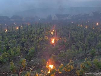 Geadas causaram prejuízos recordes para produtores de frutas e vinhos na Europa em 2017