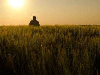Novo seguro rural pretende arrecadar R$ 3 bi da inciativa privada