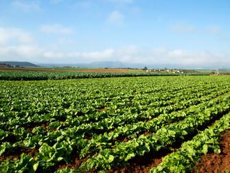 Proposta de um novo modelo para o Seguro Rural será entregue em três meses