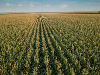 Publicado zoneamento agrícola do milho de primeira safra para 2021/2022