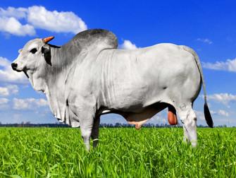 Novas regras para seguros pecuários e de animais