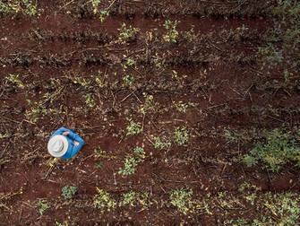 Ministérios divergem sobre Bolsa Estiagem enquanto produtores perdem safra com a seca no RS