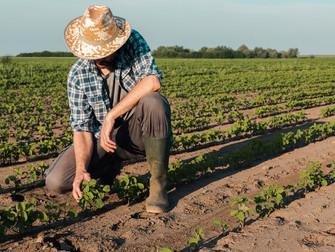Mapa divulga relação de produtores beneficiados no Programa de Seguro Rural
