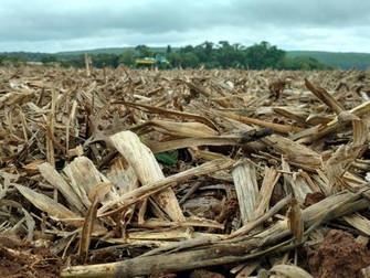 Garantia-Safra é liberado para mais de 41 mil agricultores do sertão nordestino