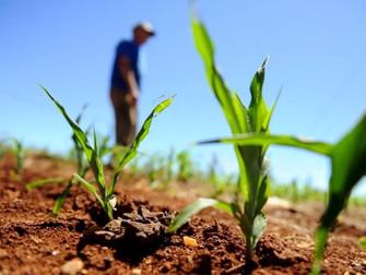 Ministério da Agricultura vai aperfeiçoar o Garantia-Safra