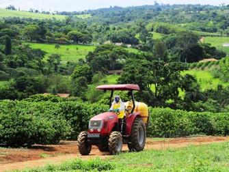 Saiba a importância do seguro agrícola de café