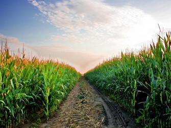 Seguro rural disponibilizou R$ 180 milhões em subvenção até junho