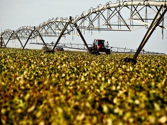 Agropecuária é único setor da economia com crescimento na pandemia, diz IBGE