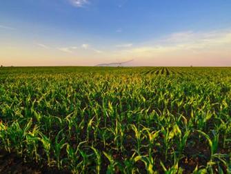 Chuva favorece desenvolvimento dos grãos no RS
