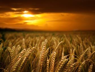 Seguro Rural exibe tendência cada vez maior no mercado, mas ainda existem empecilhos para seu cresci