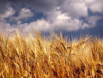 SUSEP encerra operações da Nobre Seguradora e afeta produtores rurais