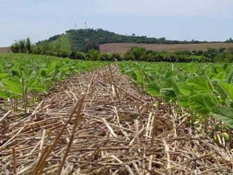 [Argentina] La sequía complica los cuadros de soja y maíz