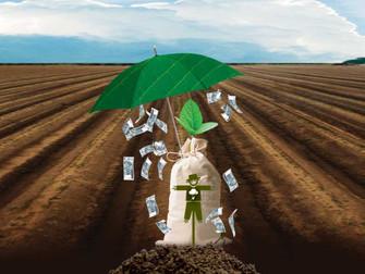 Seguro Rural: Aumento de subsídios agrícolas em São Paulo depende de liberação