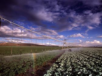 [Artigo] Gestão de Riscos com Seguro Rural e Irrigação
