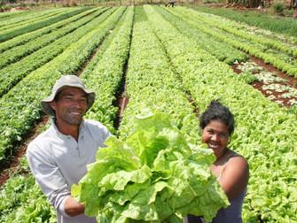 Seguro Rural deixará de receber R$ 1,3 milhão