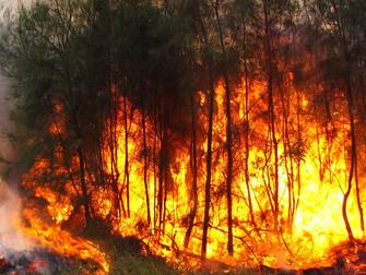 Clima aumenta riscos de incêndios florestais