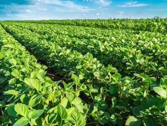 Seguradoras indenizam R$1,4 bilhão para cobrir perdas na produção de grãos e fruticultura na safra 2