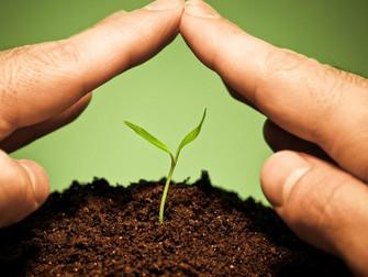 Bayer é pioneira em oferecer subsídio privado para seguro agrícola no país