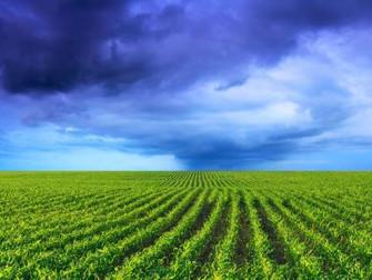 Chuva ainda é insuficiente para plantio de soja