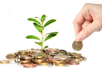FAEP pede a liberação integral de recursos para o seguro rural