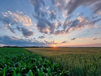 [Artigo] Principais funções do seguro rural
