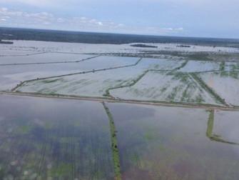 Chuvas em excesso atrasam colheita da soja e já causa prejuízos aos produtores no Tocantins