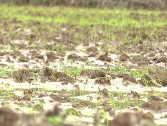 Chuva e granizo causou estragos em plantações de trigo, arroz e frutas no Sul do país
