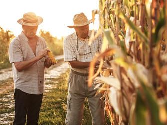 Garantia-Safra autoriza pagamento para mais de 13 mil agricultores familiares