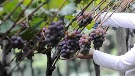 Jundiaí abre inscrições para o Programa de Subvenção de Seguro Agrícola 2021