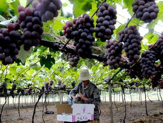 Produtores rurais recebem R$ 406 mil da subvenção agrícola