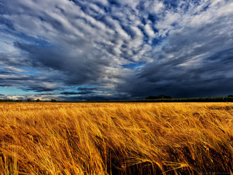 Seguro paramétrico de índices climáticos é novidade no setor agrícola
