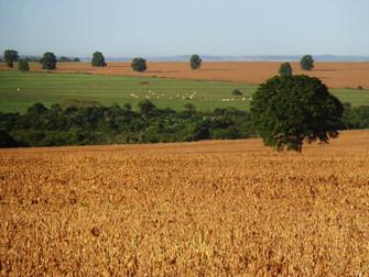 Programa Campo Futuro inclui seguro rural na qualificação dos produtores