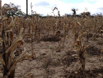 Centro-Oeste enfrenta seca e sofre com prejuízos na produção agrícola