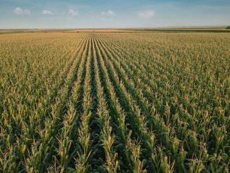 Valor da produção agropecuária está estimado em R$ 703,8 bilhões para 2020