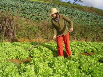 Agricultores atingidos pela seca no Nordeste são amparados pelo Garantia-Safra