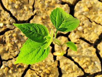 Qual o papel do seguro agrícola privado?