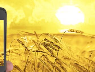 [Artículo] Seguro agrícola 100% digital