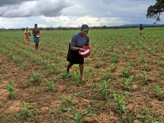 Seguradoras se unem para oferecer seguro rural na África