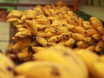 MAPA libera quarta (9) R$ 30 mi em subvenção ao prêmio do seguro rural para fruticultores