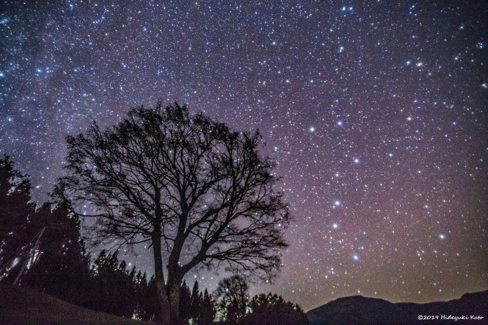 北斗七星と樹木