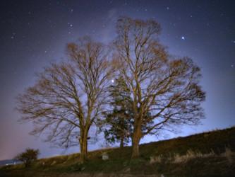 のっぽの樹木と星空