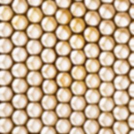 1Stockify - Hi Honey Sample Bundle Image