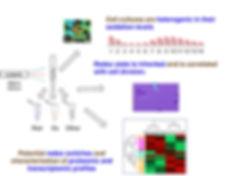 elife-scheme-web-page.jpg