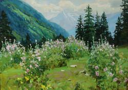 Цветение мальвы в горах 50х70