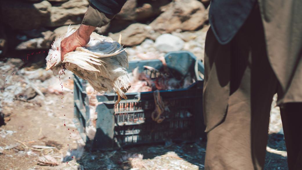 Pakistan-05932.jpg
