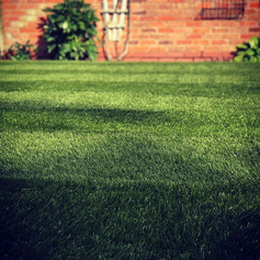 The Perfect lawn- Astro turf 🍃Ground wo