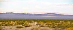 542_Desert14