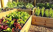 proven winners perennials at black forest garden centre