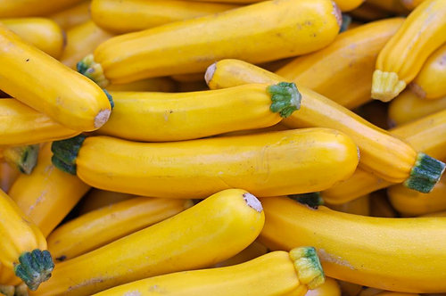 SUMMER SQUASH  ZUCCHINI YELLOW   Box with 8 Plants